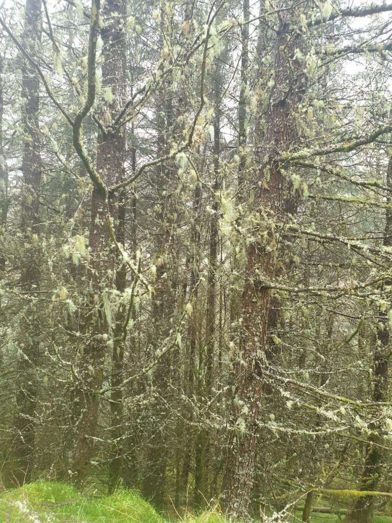 Moss covers the trees in this eerie part of the wood in Glen Dessary