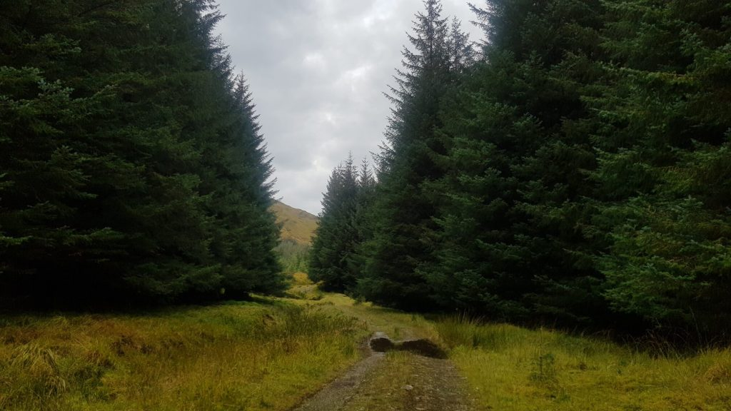 The woodland path of Glen Dessary