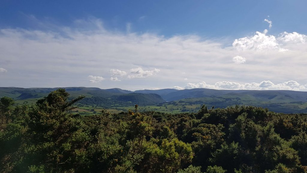View to the centre of the Lake District over the gorse bushes on Knipescar Common