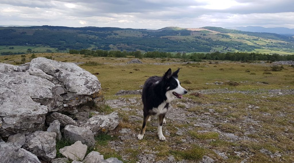 Eve poses next to the highest point of Whitbarrow