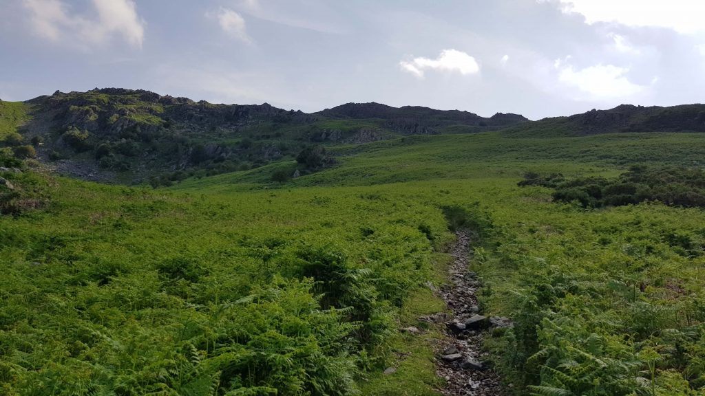 The ascent of Great Stickle through the bracken