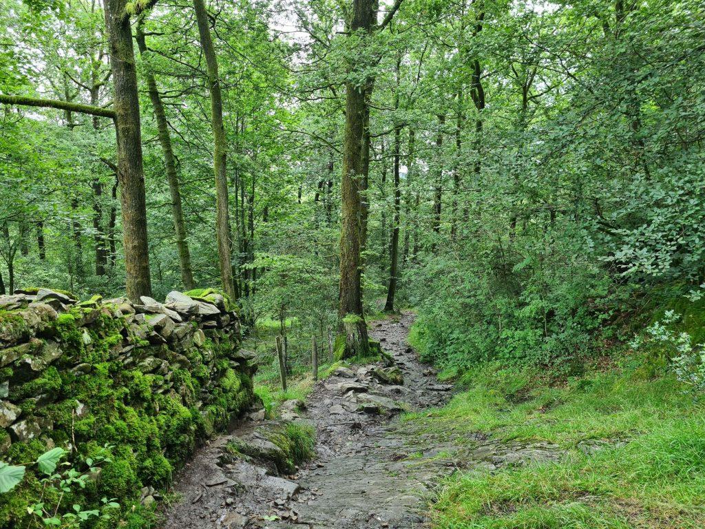Slippery trails through woodland