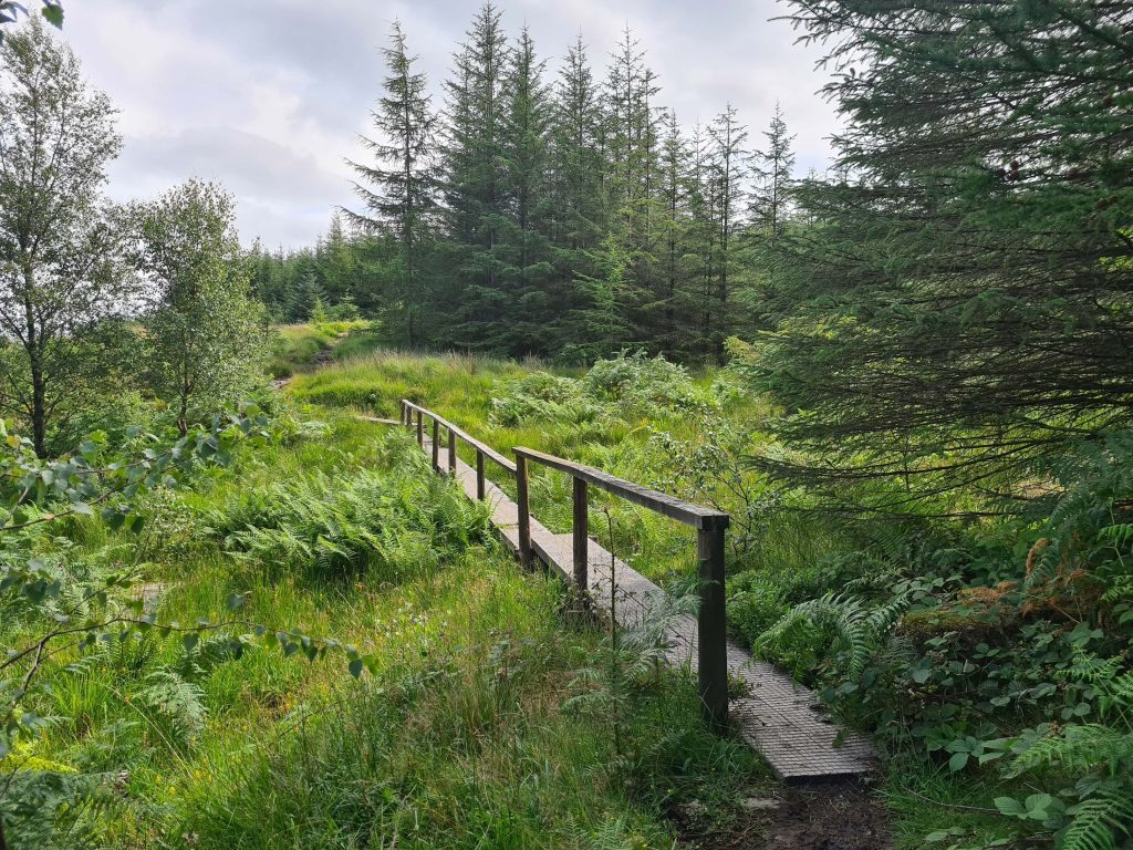 Footbridge en route to Claife Heights from Latterbarrow