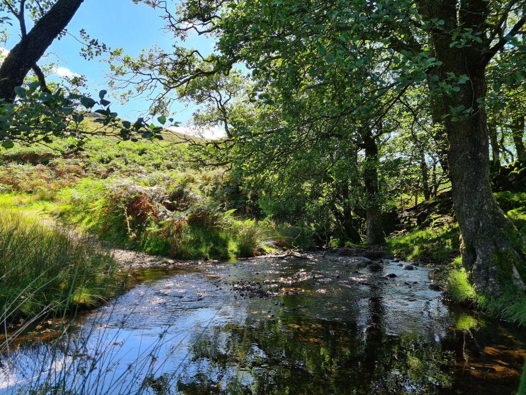 Green Moor Beck