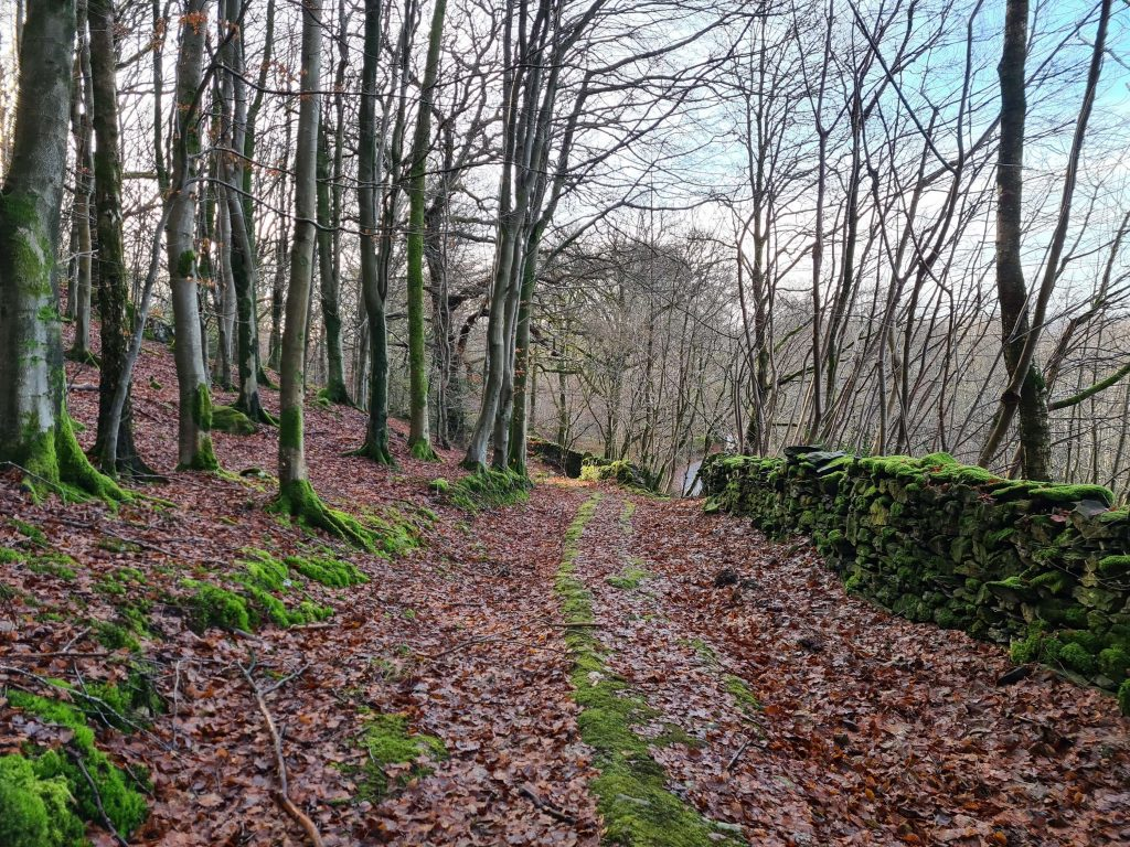 Woodland Trails as we left Gummer's How to head for Finsthwaite Heights