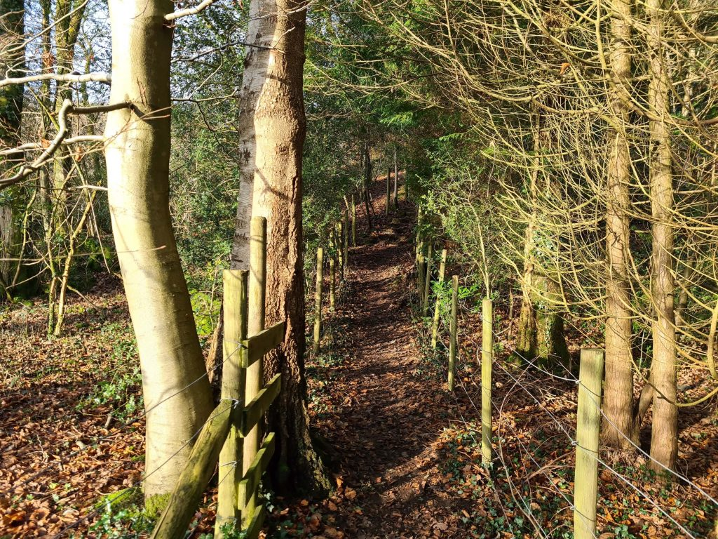 Trails leading up to Finsthwaite Tower