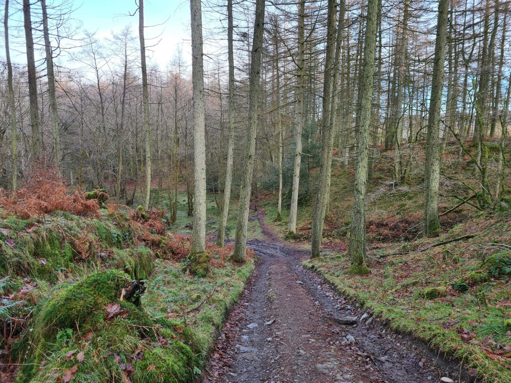 Wide trails through woodland