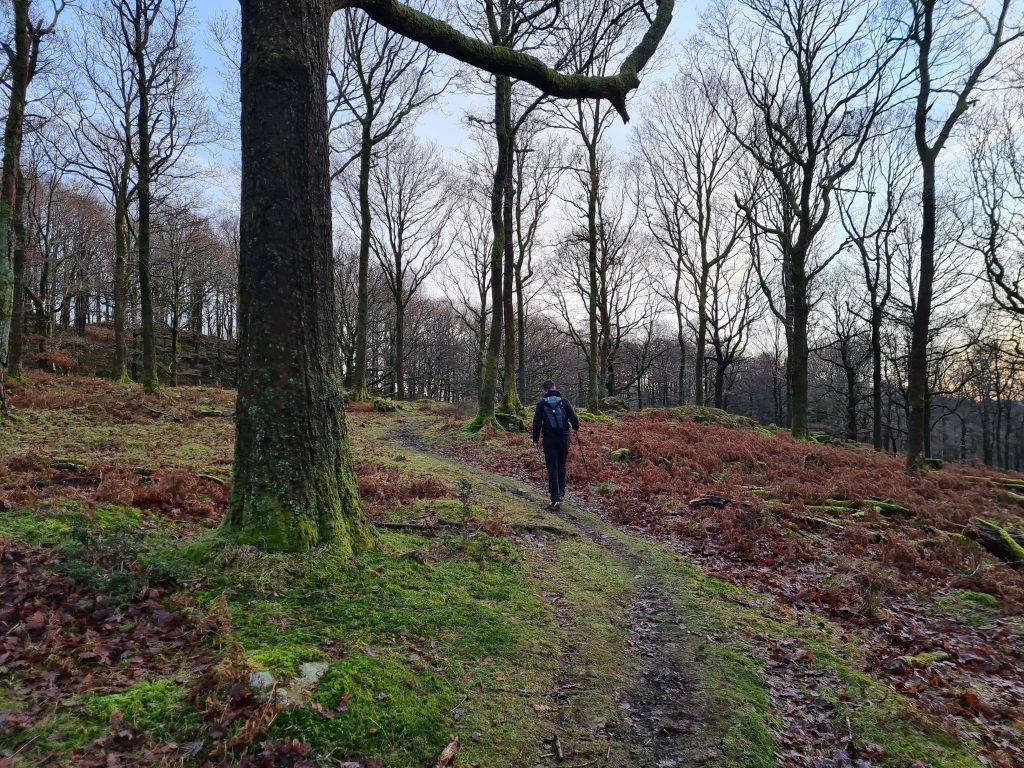 Trail through Wintering Park